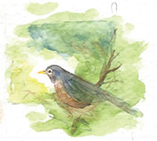 Watercolor painting of robin on a branch  by David Guillemette.